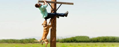 Johnny Knoxville Hinging From A Wooden Post With A Dog Biting Him And Hanging From His Trousers