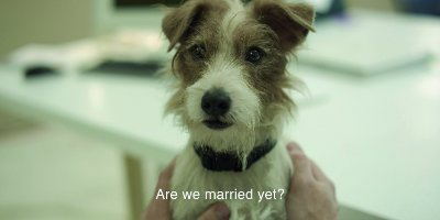 A Dog With Subtitles Saying 'Are We Married Yet?'
