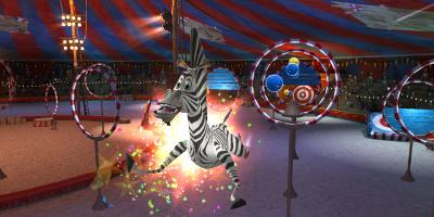 Zebra jumping through hoops