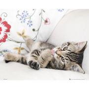 Kitten Licking Paw - Mini Poster - 40 x 50cm