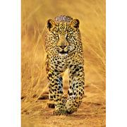 Leopard - Maxi Poster - 61 x 91.5cm