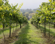 Vineyard Tour and Tasting with Lunch for Two