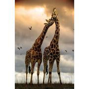 Giraffes Kissing - Maxi Poster - 61 x 91.5cm
