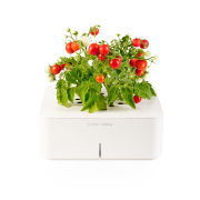 Click & Grow Starter Kit with Mini Tomato