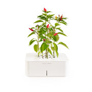 Click & Grow Starter Kit with Chili Pepper