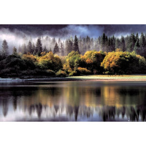 Forest Autumn Lights - Maxi Poster - 61 x 91.5cm
