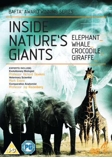 Inside Nature S Giants Giraffe