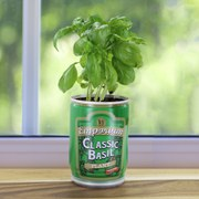 Grow Your Own Basil