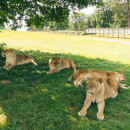Half Day Safari Park Photography Experience