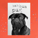 Bah Hum Pug Greetings Card