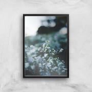 in homeware x Charlotte Greedy Winter Blossom Giclee Art Print