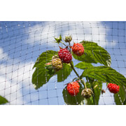 Sprout Garden Fruit Cage Net in Black - 32 x 2m