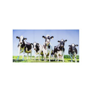 Inquisitive Cows Outdoor Canvas 70x140cm