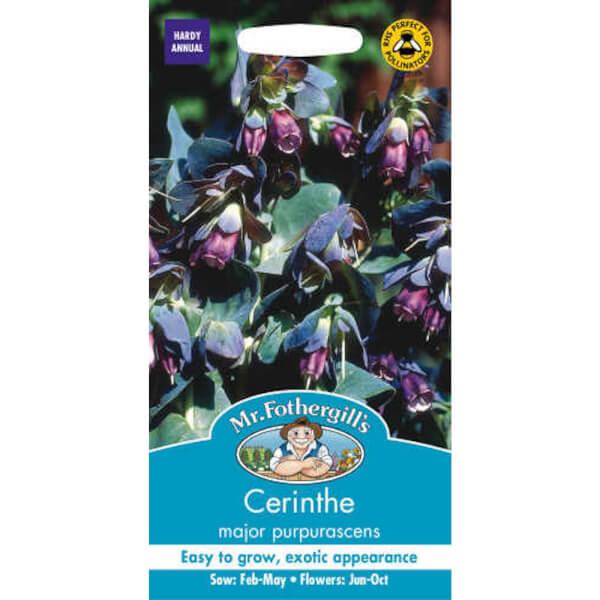 Cerinthe Major Purpurascens Seeds