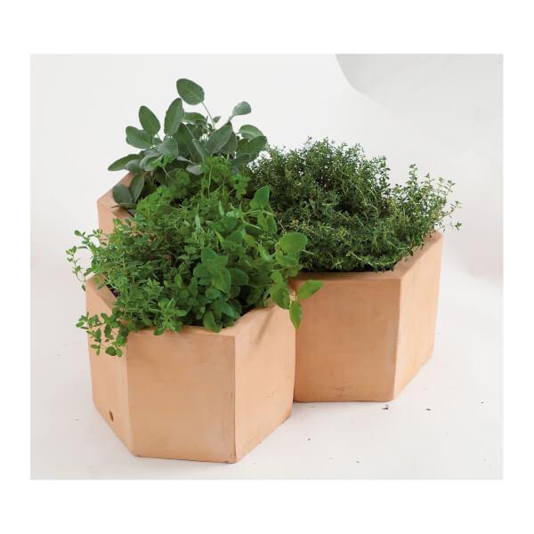 Hexagonal Terracotta Herb Pot 25cm