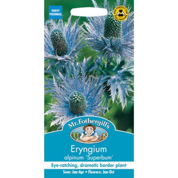 Mr. Fothergill's Eryngium Alpinum Superbum Seeds