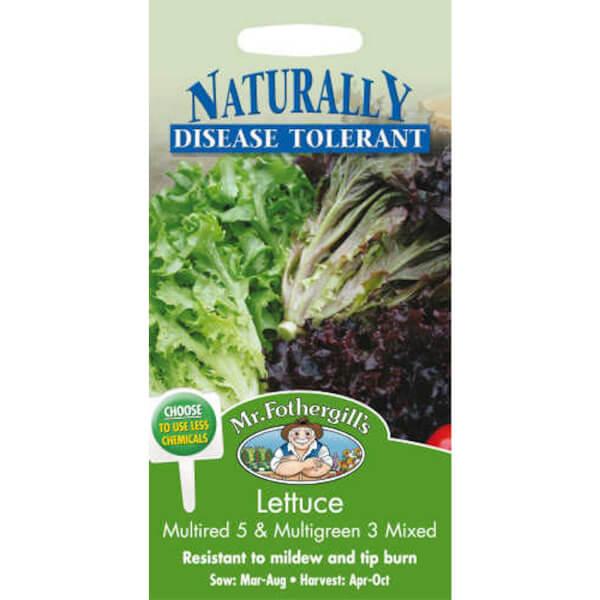 Lettuce Multired & Multigreen Mixed Vegetable Seeds