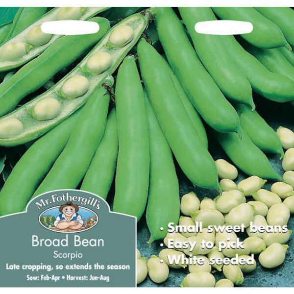 Mr. Fothergill's Broad Bean Scorpio Vegetable Seeds