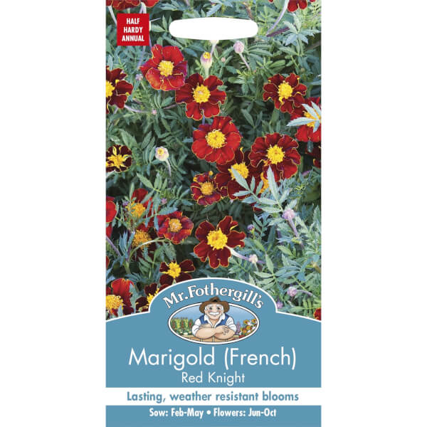 Marigold French Red Knight