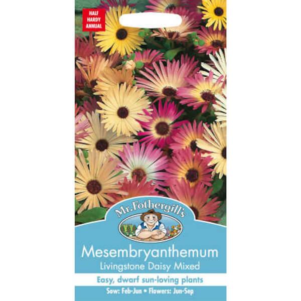 Mr. Fothergill's Mesembryanthemum Livingstone Daisy Mixed (Dorotheanthus Bellidiformis) Seeds