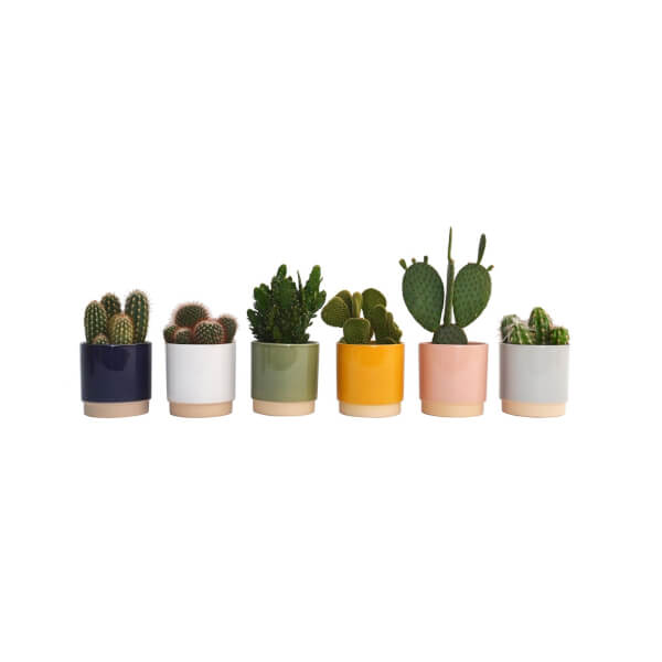 Cactus mix in Eno Duo pot 13cm