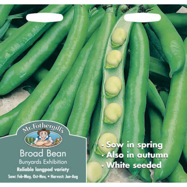 Mr. Fothergill's Broad Bean Bunyards Exhibition (Vicia Faba) Seeds