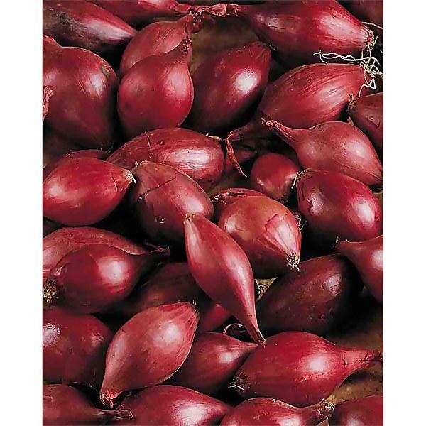 Karmen' Onion Set