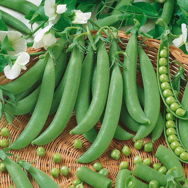 Veg Strip - Peas