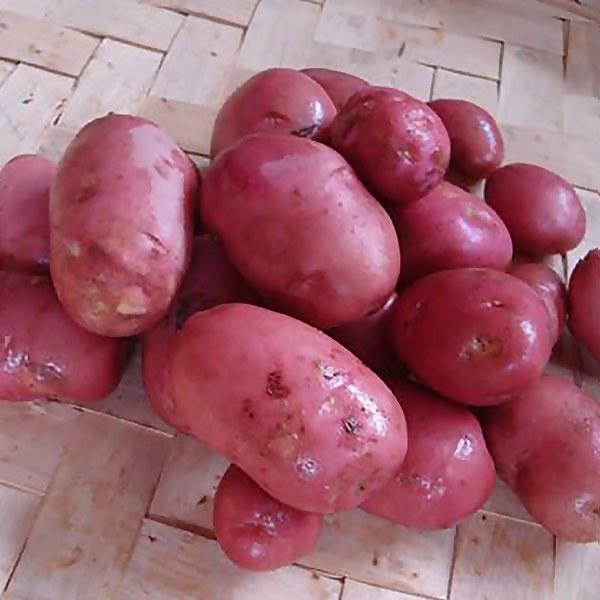 Desiree' Seed Potato - 1.5kg
