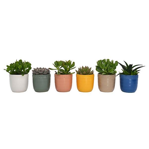 Succulent In Cella Pot 13cm