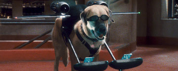 A Dog Wearing Sunglasses With Fly Equipment With Two Small Computers Attached