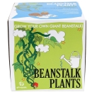 Sow and Grow Beanstalk Plants