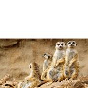Meeting The Meerkats