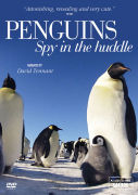 Penguin Spy in the Huddle