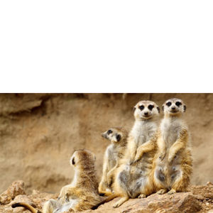 Meeting The Meerkats