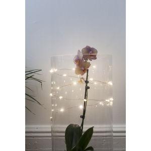 Copper String Lights: Image 4