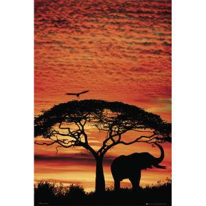Africa Sunset Elephant - Maxi Poster - 61 x 91.5cm