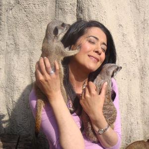 Meet the Meerkats Experience