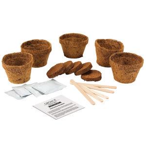 Grow Your Own Bonsai Trees Gift Box: Image 2