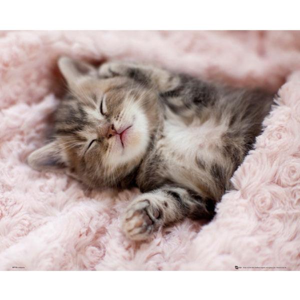 Kitten Sleeping - Mini Poster - 40 x 50cm