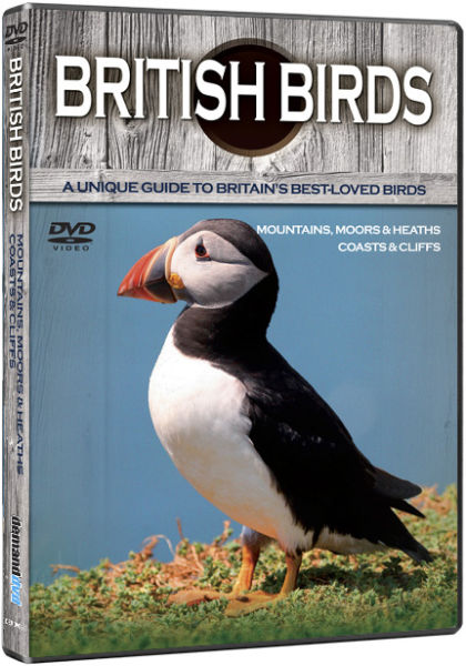 British Birds: Mountains, Coasts and Cliffs