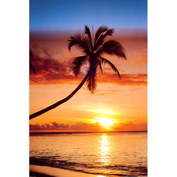 Sunset & Palm Tree - Maxi Poster - 61 x 91.5cm