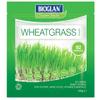 Bioglan Superfoods Supergreens Wheatgrass Powder - 100g: Image 1