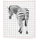 Cotton Tea Towel - Zebra