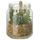 Parlane Succulent Mix in Jar Glass - Green
