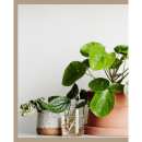 Thames and Hudson Australia: Plant Style - How to Greenify Your Space