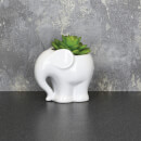 Candlelight Succulent in Elephant Pot - White