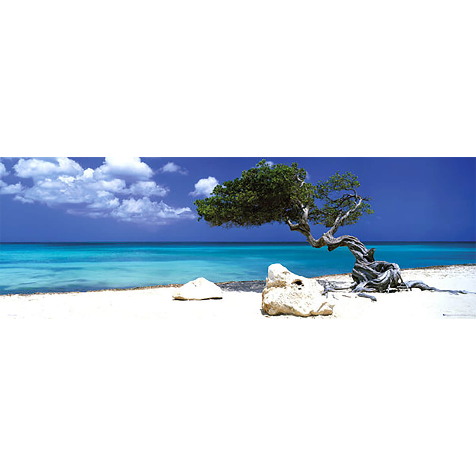 Tom Mackie Divi Divi Tree - Door Poster - 53 x 158cm
