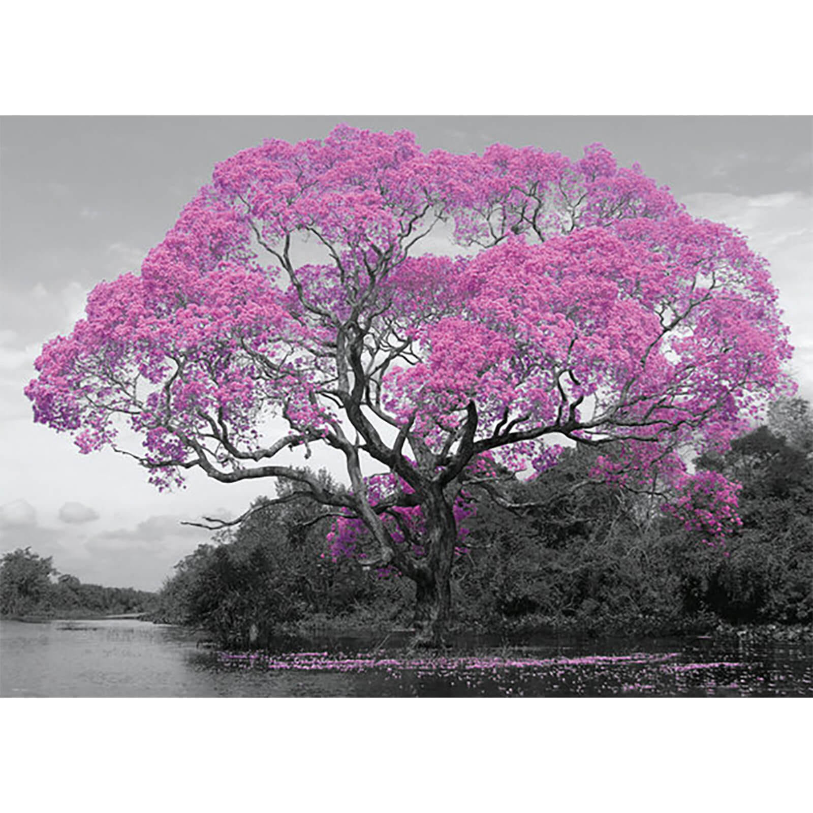 Tree Blossom - 100 x 140cm Giant Poster