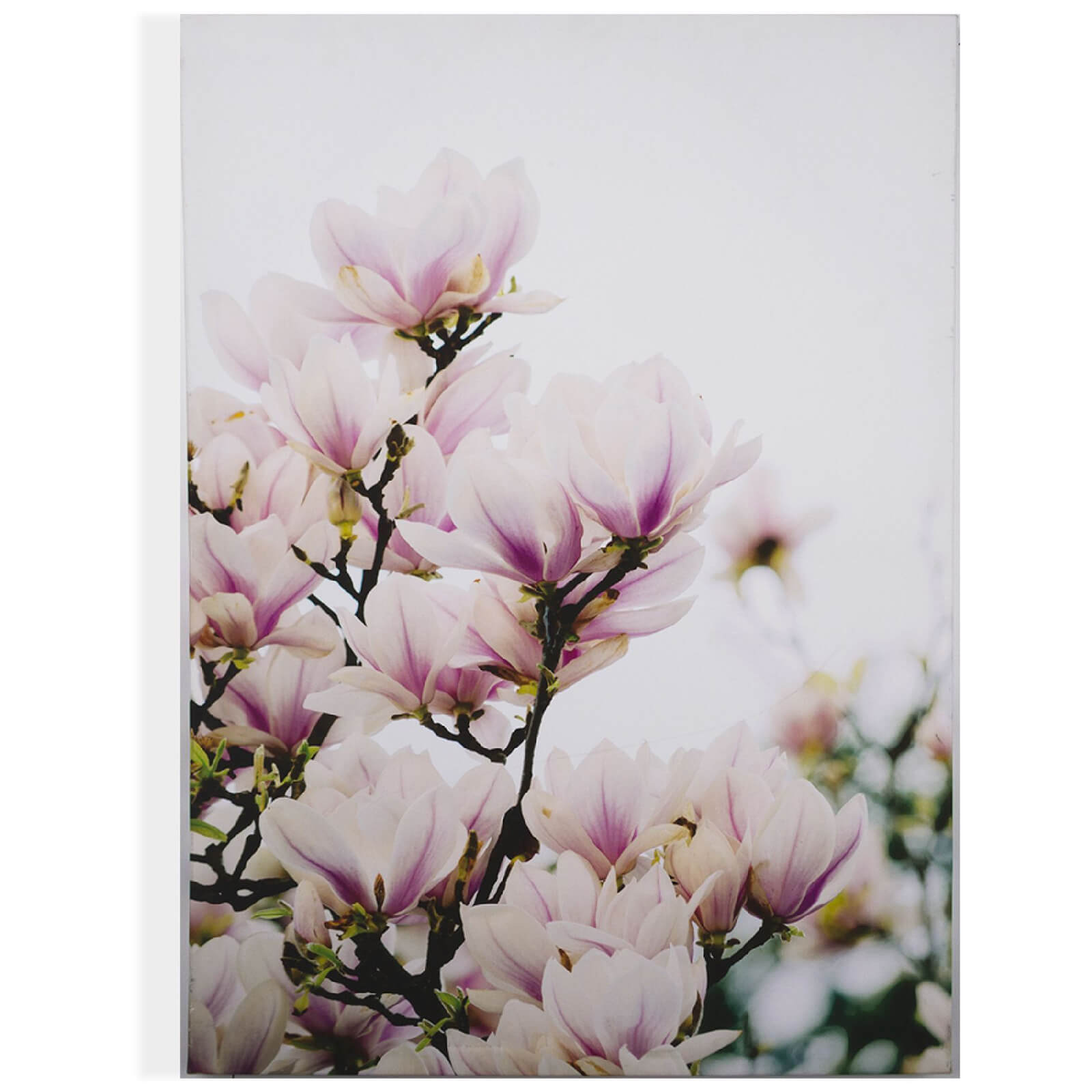 Art for the Home Magnolia Blossoms Printed Canvas